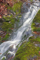 Hidden Cascade in the Deep Forest - PhotoDune Item for Sale
