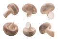 Fresh Shiitake mushrooms (Lentinula edodes)  isolated - PhotoDune Item for Sale