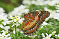 Tropical colorful butterfly among white flowers. - PhotoDune Item for Sale