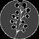 Soft Orchestral Logo