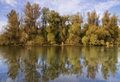 Row of willow trees - PhotoDune Item for Sale