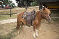 Beautiful Pony Stand in a Wild West Farm - PhotoDune Item for Sale