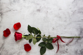 Red roses on grey stone background. - PhotoDune Item for Sale