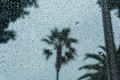 Drops of rain on the window; blurred palm trees in the background; shallow depth of field - PhotoDune Item for Sale
