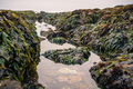 Tidepools and rocks covered in seaweed - PhotoDune Item for Sale