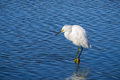White egret standing on a rock - PhotoDune Item for Sale