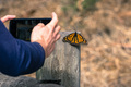 Unidentified person taking a photo of a Monarch Butterfly - PhotoDune Item for Sale