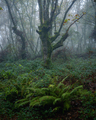 Moody atmosphere in an oak forest - PhotoDune Item for Sale