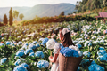 Young woman traveler relaxing and enjoying with blooming hydrangeas flower field - PhotoDune Item for Sale