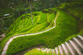 Tegalalang rice terrace in the Ubud, Bali - PhotoDune Item for Sale