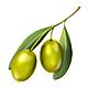 Olive branch - GraphicRiver Item for Sale