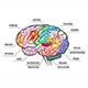 Human Brain Functional Map - GraphicRiver Item for Sale