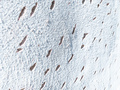 Textured white image of a wall with holes - PhotoDune Item for Sale