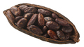 Halved cocoa pod - PhotoDune Item for Sale