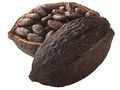 Halved cocoa pod with whole fermented cacao beans (Theobroma cacao fruit)  isolated - PhotoDune Item for Sale