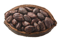 Halved cocoa pod with whole fermented cacao beans - PhotoDune Item for Sale