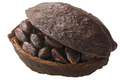 Halved cocoa pod with whole fermented cacao beans (Theobroma cacao fruit w seeds)  isolated - PhotoDune Item for Sale