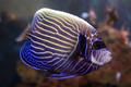 Kelly Tarltons Underwater World, Aukland,  New Zealand - PhotoDune Item for Sale