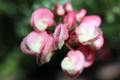 Botanical Gardens, Wellington, New Zealand - PhotoDune Item for Sale