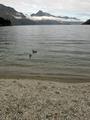 Lake Wakatipu, New Zealand - PhotoDune Item for Sale