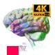 Creative Brain - VideoHive Item for Sale