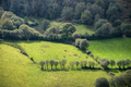 A herd of cows basking in the sun on a green pasture - PhotoDune Item for Sale