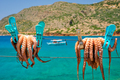 Fresh octopus drying on rope on sun with turquoise Aegean sea on background, Crete island, Greece - PhotoDune Item for Sale