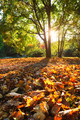 Golden autumn fall October in famous Munich relax place - Englishgarten. Munchen, Bavaria, Germany - PhotoDune Item for Sale