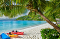 Beach with kayaks and palm tree at Seychelles - PhotoDune Item for Sale