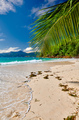 Beautiful Anse Soleil beach with palm tree at Seychelles - PhotoDune Item for Sale