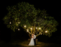 Couple under a tree on their wedding day - PhotoDune Item for Sale