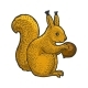 Squirrel and Hazelnut Sketch Vector Illustration - GraphicRiver Item for Sale