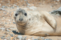 seal pup close-up - PhotoDune Item for Sale