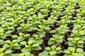 Flower plant nursery - PhotoDune Item for Sale