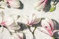 Beautiful pink magnolia flowers on white marble table. Top view. flat lay. Spring minimal concept. - PhotoDune Item for Sale