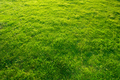 Green grass background texture - PhotoDune Item for Sale