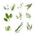 fresh herb and spices isolated on white background, top view - PhotoDune Item for Sale