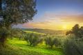 Maremma countryside panorama and olive trees. Casale Marittimo, Pisa, Tuscany Italy - PhotoDune Item for Sale