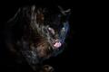 Close up big leopard isolated on black background - PhotoDune Item for Sale