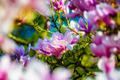 Closeup of beautiful magnolia flowers - PhotoDune Item for Sale