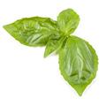 sweet basil herb leaves isolated on white background. Genovese basil leaf. - PhotoDune Item for Sale