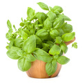 Sweet basil leaves in wooden mortar isolated on white background cutout. - PhotoDune Item for Sale
