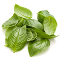 Sweet basil herb leaves handful isolated on white background closeup - PhotoDune Item for Sale
