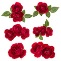 Collection of red roses isolated on white background. Set of different bouquet. Flat lay, top view. - PhotoDune Item for Sale