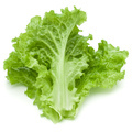 fresh green lettuce salad leaves isolated on white background - PhotoDune Item for Sale