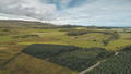 Pine forest at green valley aerial. Nobody nature landscape. Rural farmlands at road. Countryside - PhotoDune Item for Sale