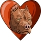 Pitbull Head Dog in Heart Vector Illustration - GraphicRiver Item for Sale