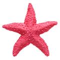 Red starfish souvenir, handmade decoration - PhotoDune Item for Sale