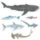 Vector Set of Cartoon Sharks - GraphicRiver Item for Sale
