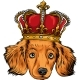 Vector Head Dog King in White Background - GraphicRiver Item for Sale